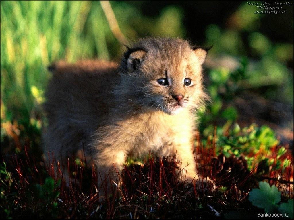 child animal 043