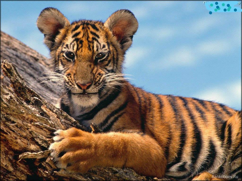 child animal 131