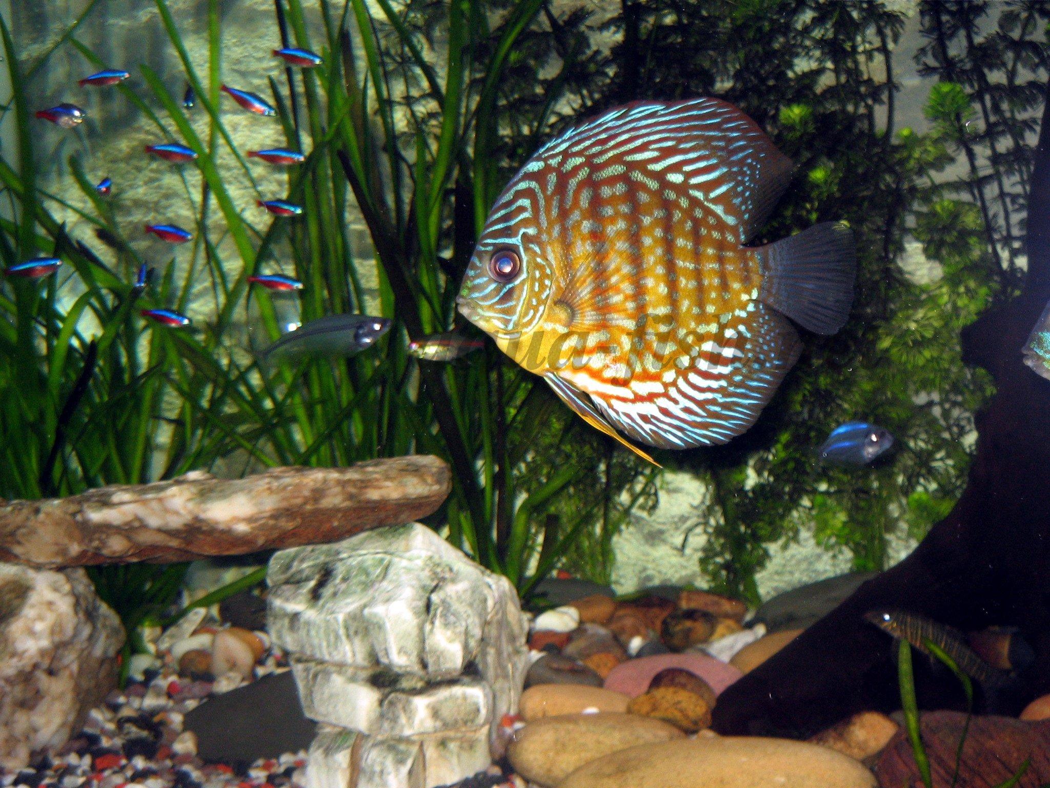 discus aquarium 5