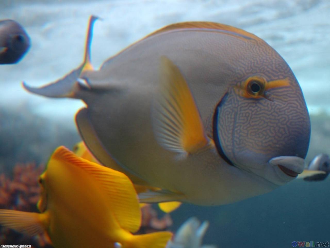 discus fish 1280 x 960